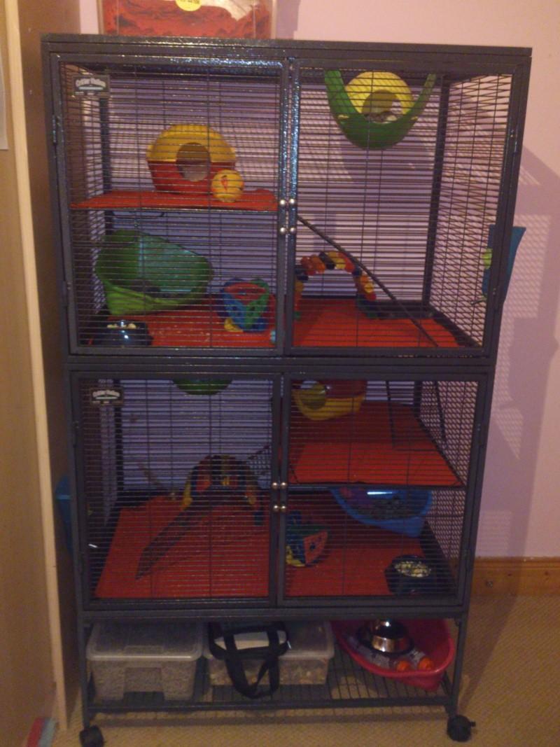 Critter nation cage! Dsc_0013