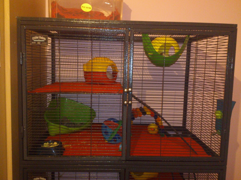 Critter nation cage! Dsc_0014