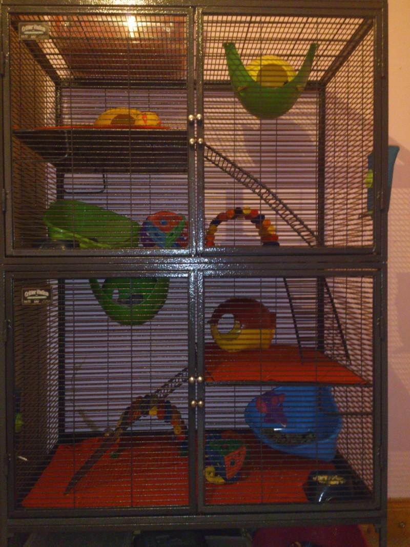 Critter nation cage! Dsc_0015