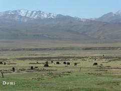 La Chine sac au dos (23) Aux confins du Gansu (甘肃) et du Qinghaï (青海), un bel aperçu  du Bouddhisme Tibétain 23-3-y10