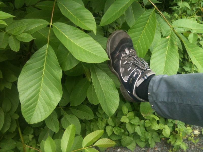 Was für Obstsorten habt Ihr denn im Garten? Aussaat, Spalier, Beerensträucher, Erfahrung und Hilfe :) - Seite 3 Img_0410