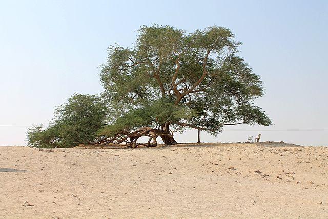 LES ARBRES LES PLUS ORIGINAUX Tree_o10