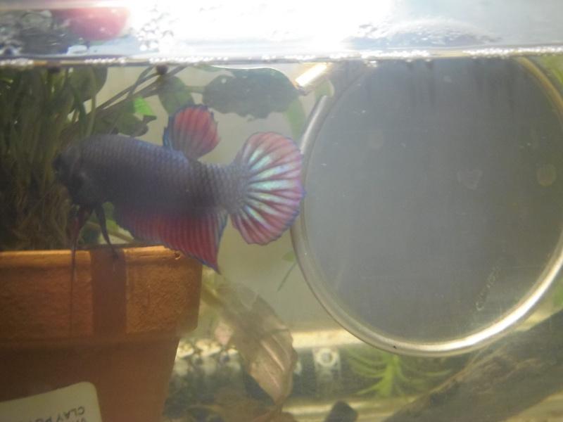Aquarium pour mon giant  - Page 3 11653413