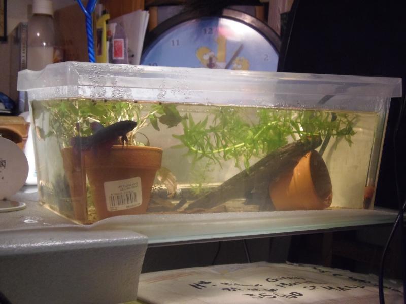 Aquarium pour mon giant  - Page 3 11653414