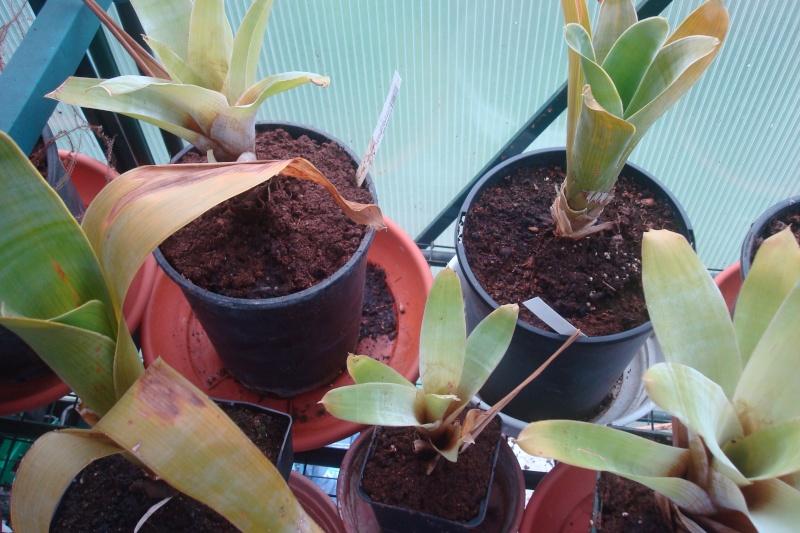 Les plantes de Ted82 - Page 2 Collec11