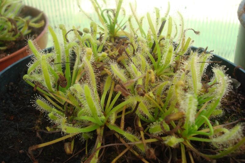 Les plantes de Ted82 D_cape10