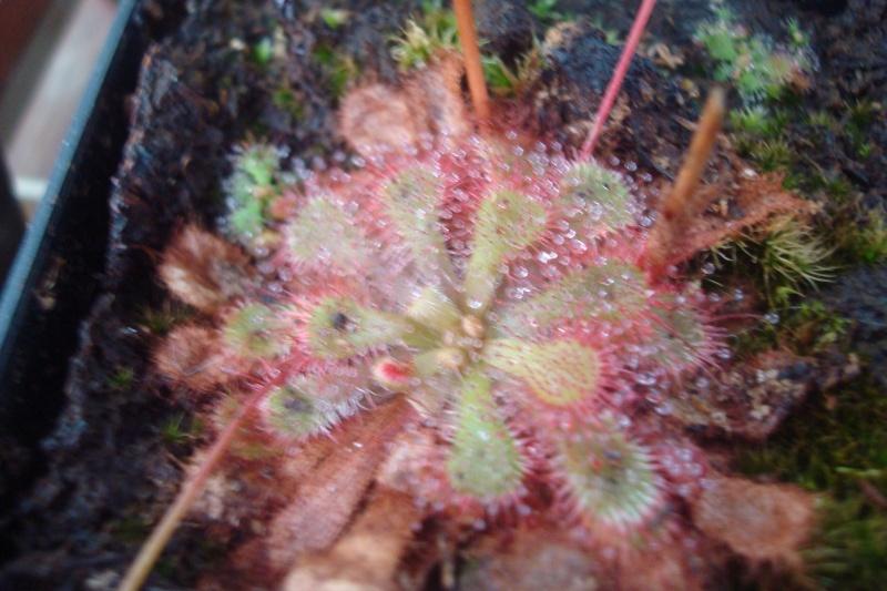 Les plantes de Ted82 - Page 2 D_diel11