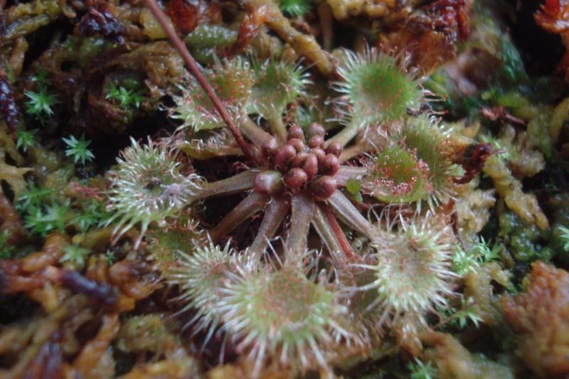 Les plantes de Ted82 - Page 5 D_rotu14