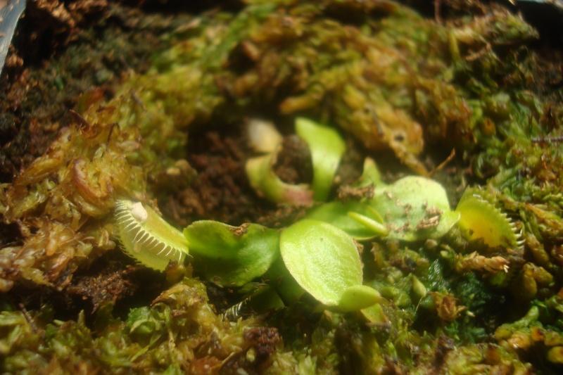 Les plantes de Ted82 - Page 2 Dio_lo10
