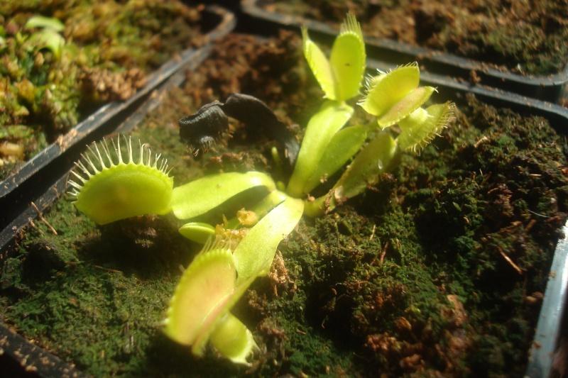 Les plantes de Ted82 - Page 2 Dio_mi10