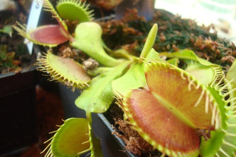 Les plantes de Ted82 Dio_ty11