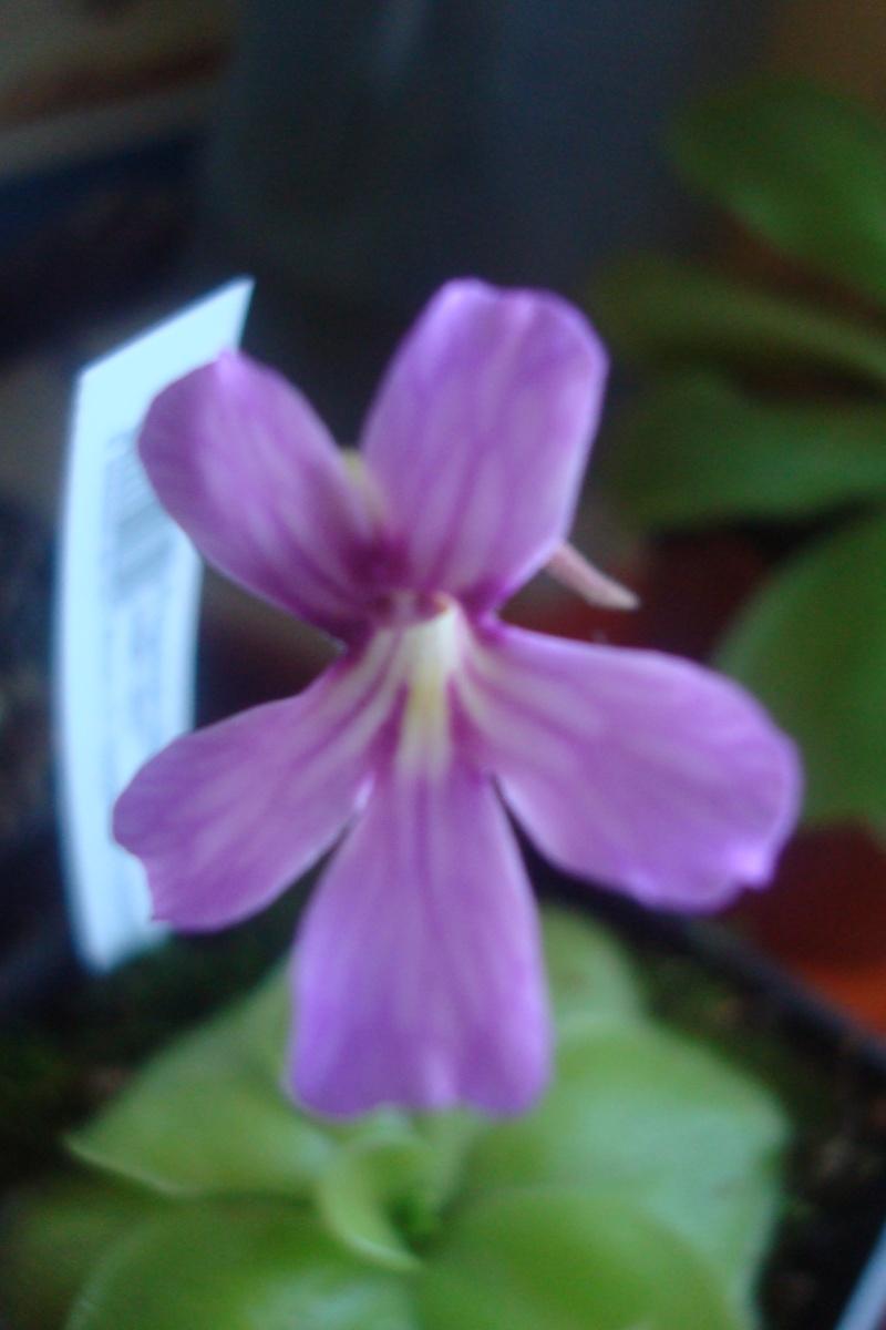 Les plantes de Ted82 - Page 2 Fleur_10