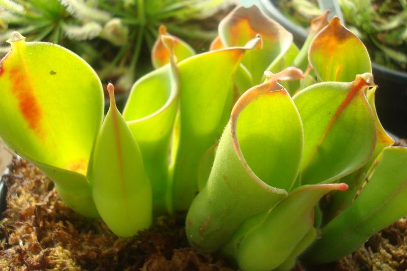 Les plantes de Ted82 - Page 3 Heliam10