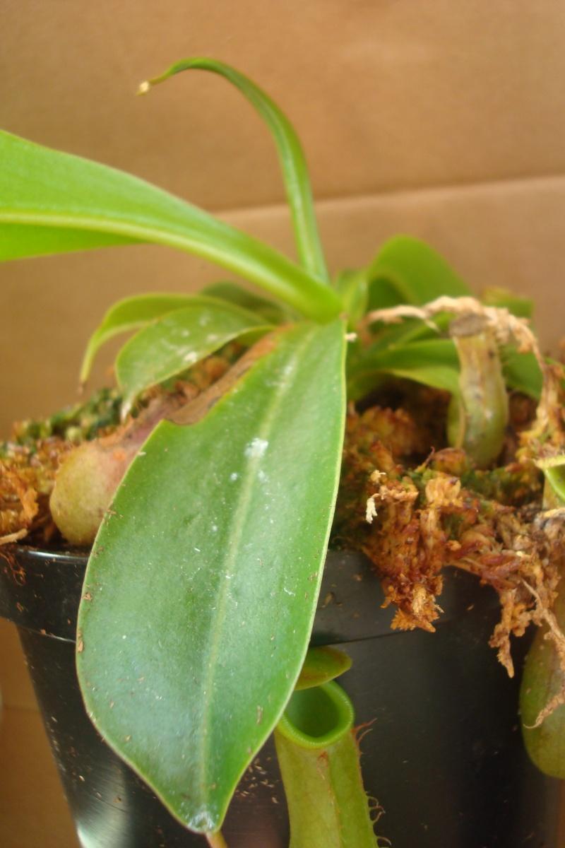 Les plantes de Ted82 N_xven10
