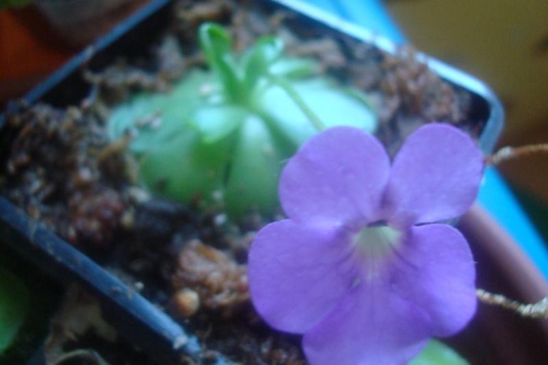 Les plantes de Ted82 - Page 2 P_cycl10