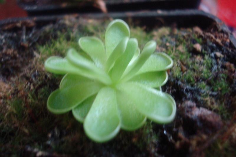 Les plantes de Ted82 P_esse10