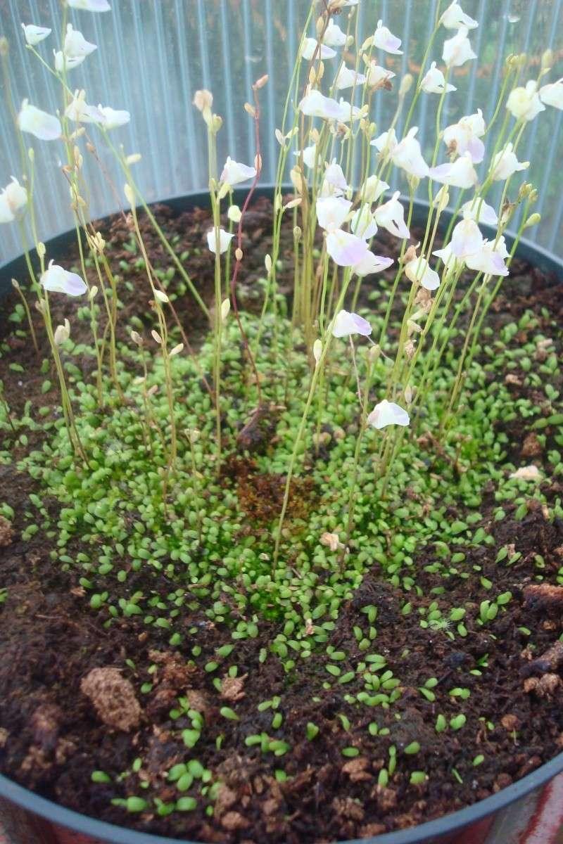 Les plantes de Ted82 - Page 5 U_livi13