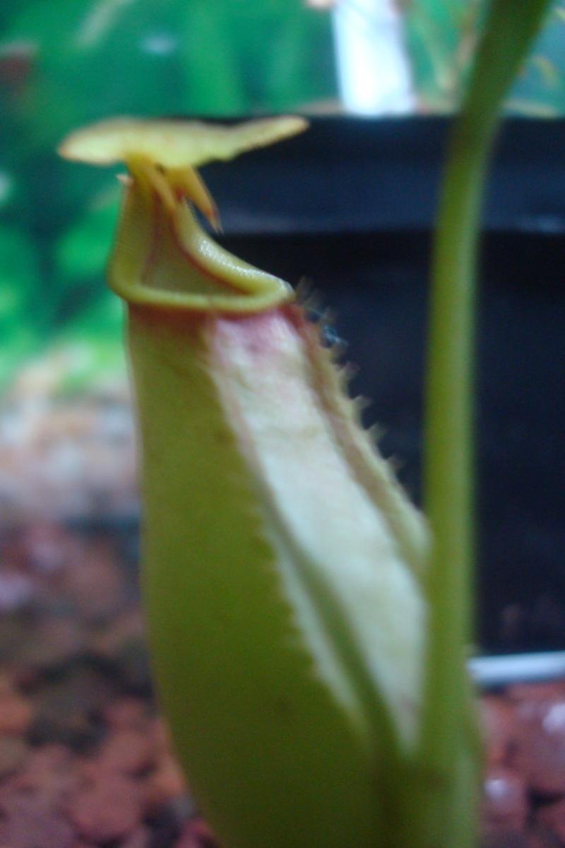 Les plantes de Ted82 - Page 2 Urne_b10