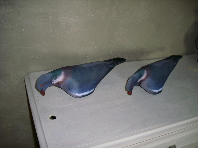 Nouvelles formes pigeons  I0001_11