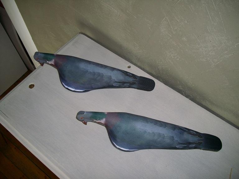 Nouvelles formes pigeons  I0001_12