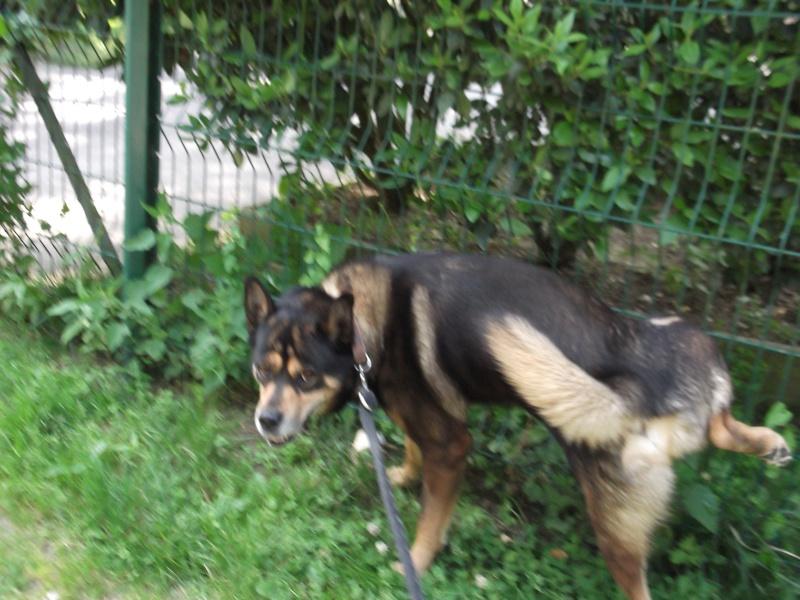 Alkane en promenade jusqu'au jour de son adoption le 14 juillet 2013 Dscf0715