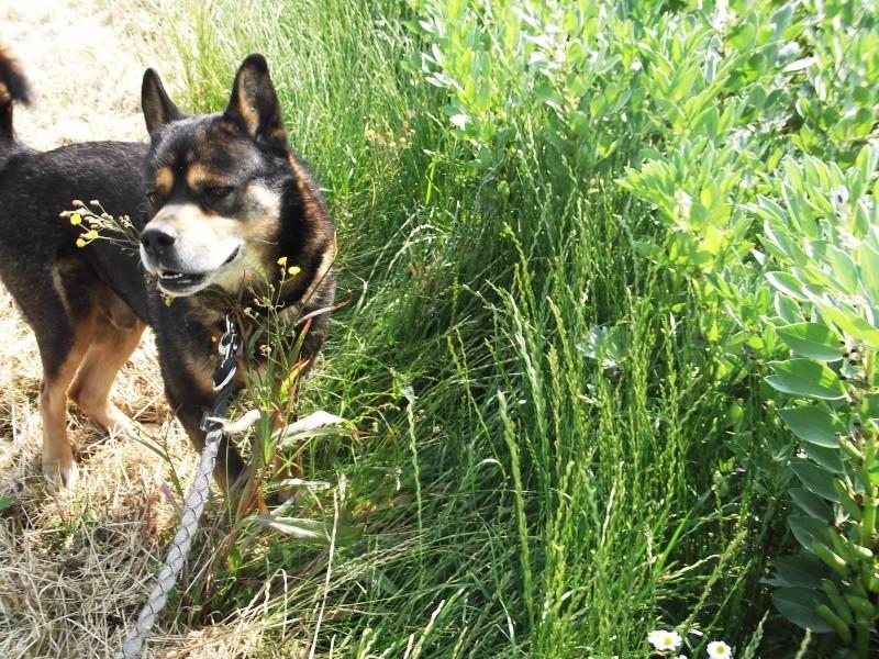 Alkane en promenade jusqu'au jour de son adoption le 14 juillet 2013 Dscf0717