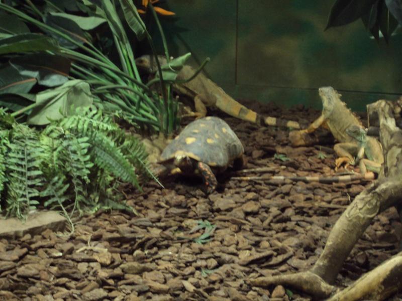 """Visite de """"Pairi daiza"""" (Belgique). """"les tortue"""" Dsc04311"""
