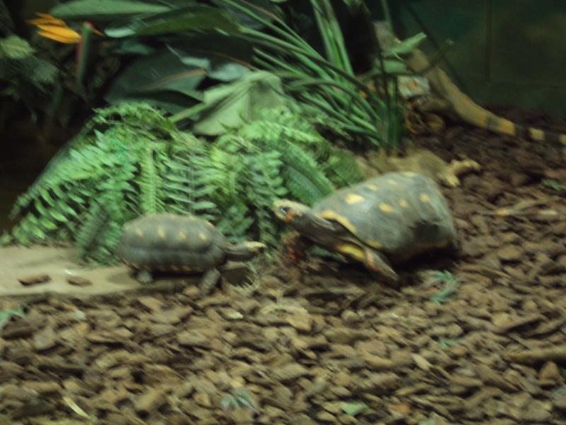 """Visite de """"Pairi daiza"""" (Belgique). """"les tortue"""" Dsc04312"""