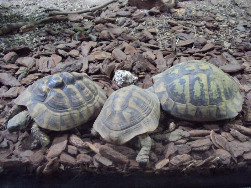 """Visite de """"Pairi daiza"""" (Belgique). """"les tortue"""" Dsc04319"""