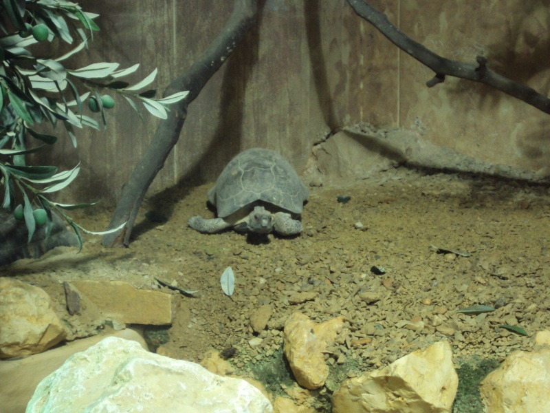 """Visite de """"Pairi daiza"""" (Belgique). """"les tortue"""" Dsc04323"""