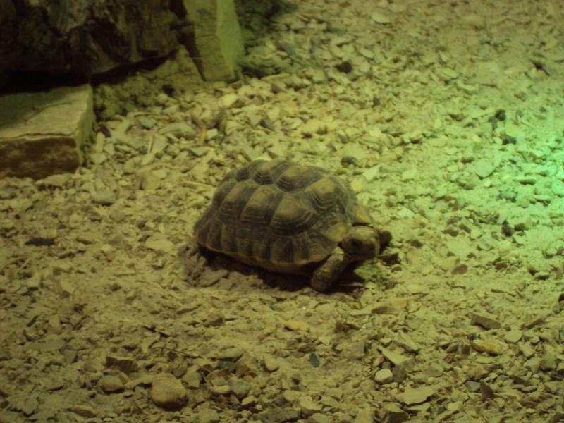 """Visite de """"Pairi daiza"""" (Belgique). """"les tortue"""" Dsc04324"""