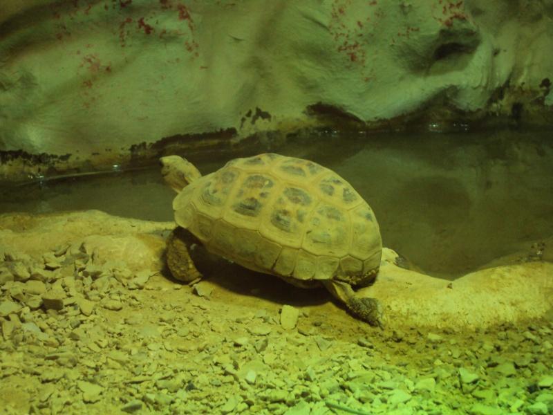 """Visite de """"Pairi daiza"""" (Belgique). """"les tortue"""" Dsc04325"""