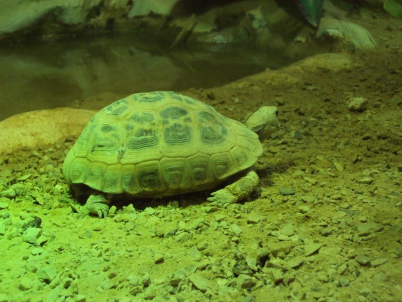 """Visite de """"Pairi daiza"""" (Belgique). """"les tortue"""" Dsc04326"""