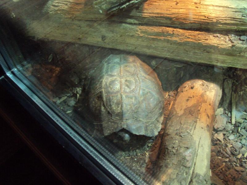 """Visite de """"Pairi daiza"""" (Belgique). """"les tortue"""" Dsc04330"""