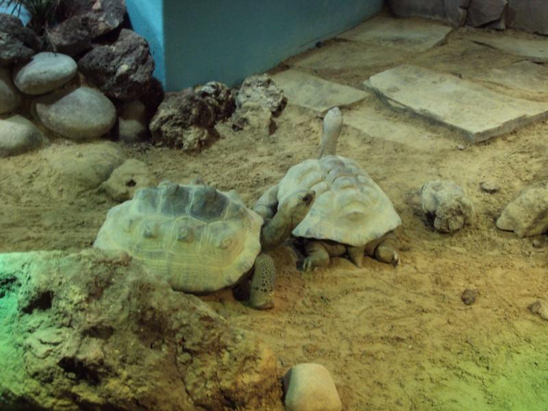 """Visite de """"Pairi daiza"""" (Belgique). """"les tortue"""" Dsc04336"""