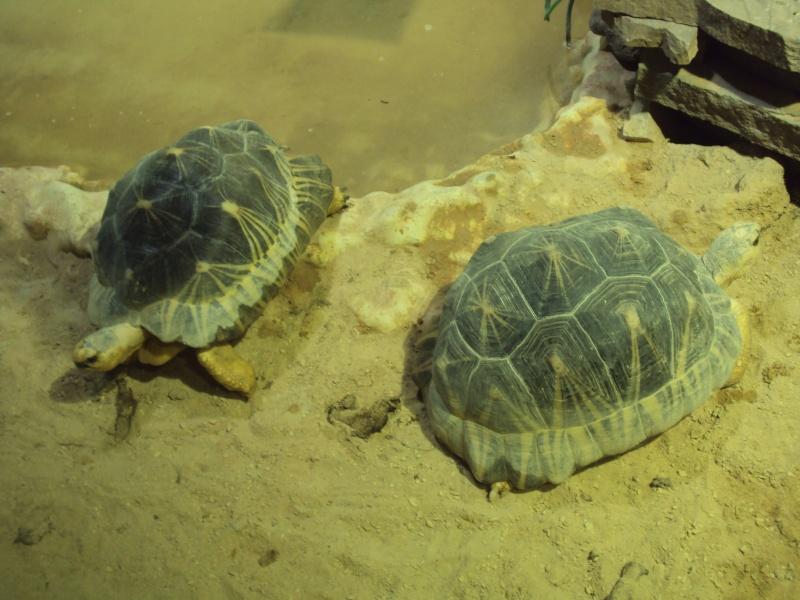 """Visite de """"Pairi daiza"""" (Belgique). """"les tortue"""" Dsc04339"""