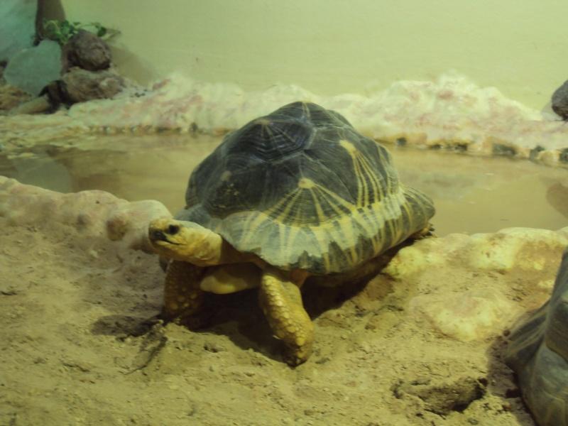"""Visite de """"Pairi daiza"""" (Belgique). """"les tortue"""" Dsc04340"""