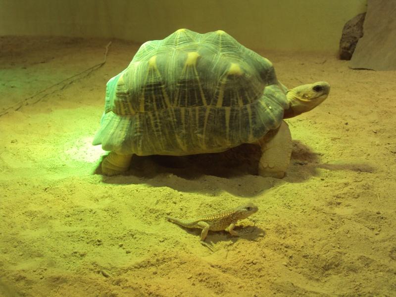 """Visite de """"Pairi daiza"""" (Belgique). """"les tortue"""" Dsc04344"""
