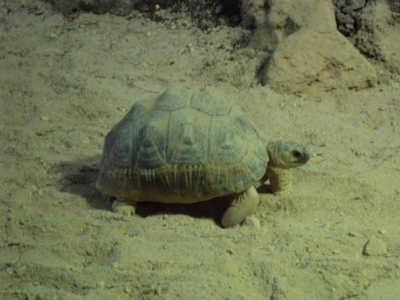 """Visite de """"Pairi daiza"""" (Belgique). """"les tortue"""" Dsc04345"""