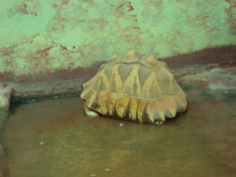 """Visite de """"Pairi daiza"""" (Belgique). """"les tortue"""" Dsc04410"""