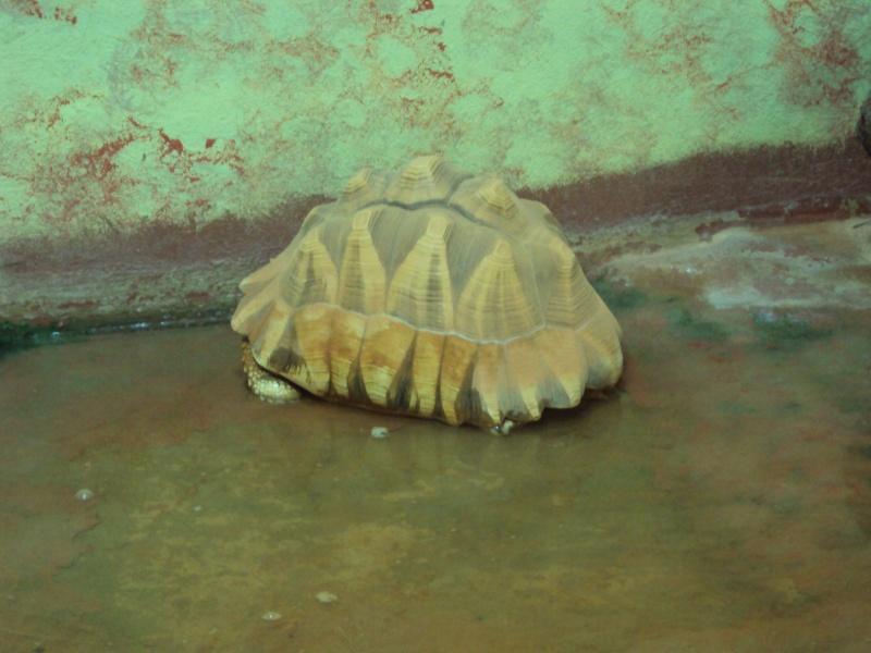 """Visite de """"Pairi daiza"""" (Belgique). """"les tortue"""" Dsc04411"""
