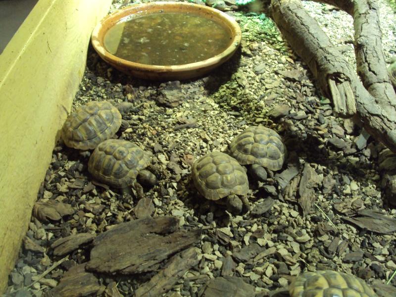 """Visite de """"Pairi daiza"""" (Belgique). """"les tortue"""" Dsc04413"""