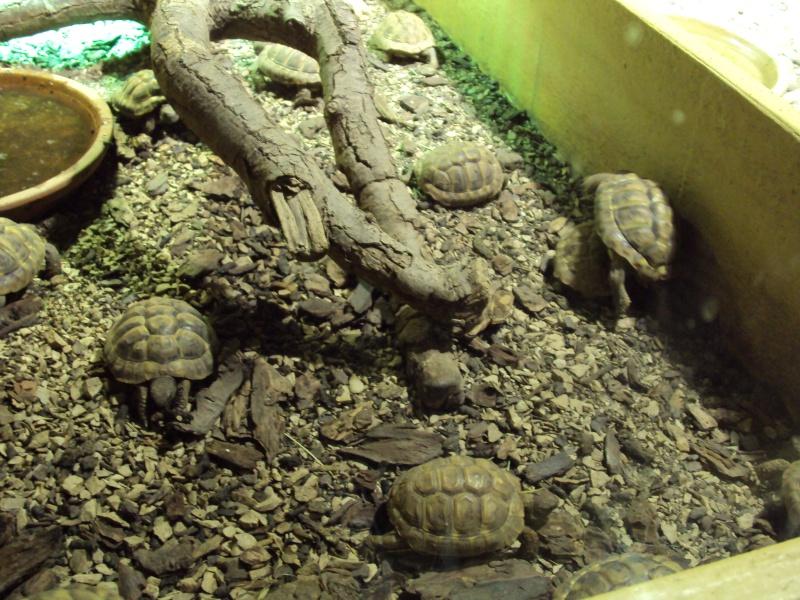 """Visite de """"Pairi daiza"""" (Belgique). """"les tortue"""" Dsc04414"""