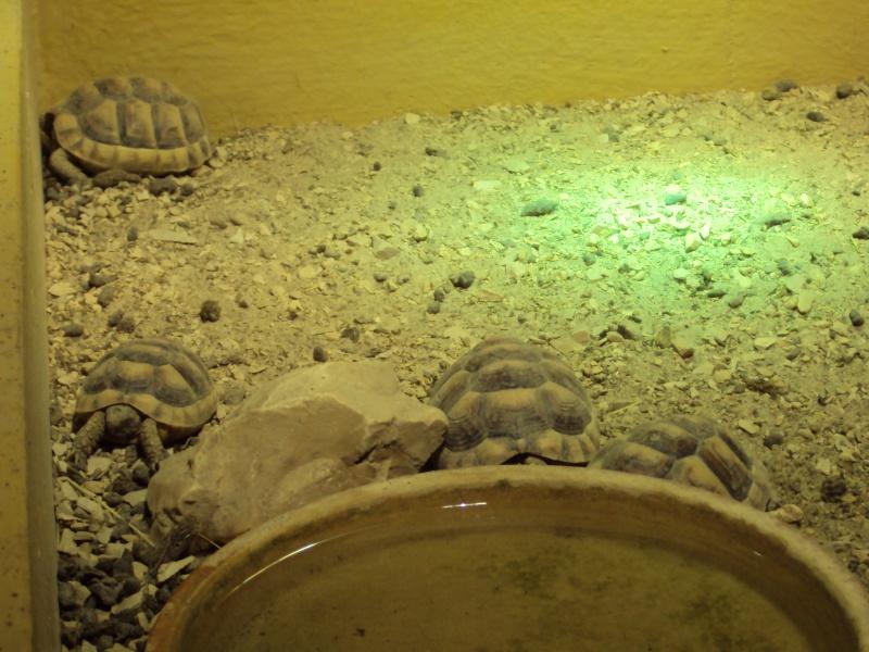 """Visite de """"Pairi daiza"""" (Belgique). """"les tortue"""" Dsc04415"""