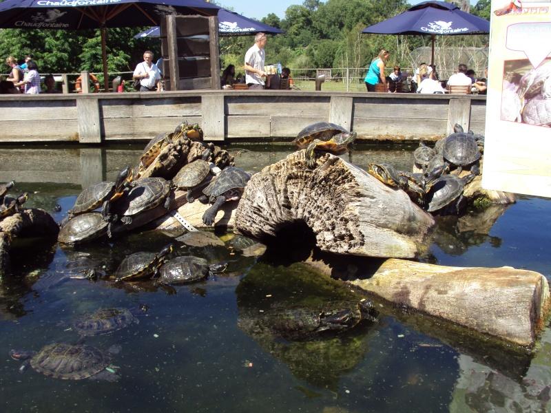 """Visite de """"Pairi daiza"""" (Belgique). """"les tortue"""" Dsc04417"""