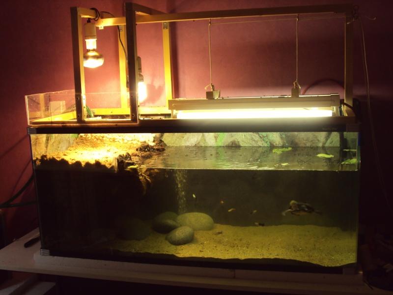 Présentation de mon aquarium n°1 Dsc04434