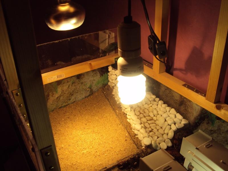 Présentation de mon aquarium n°1 Dsc04437