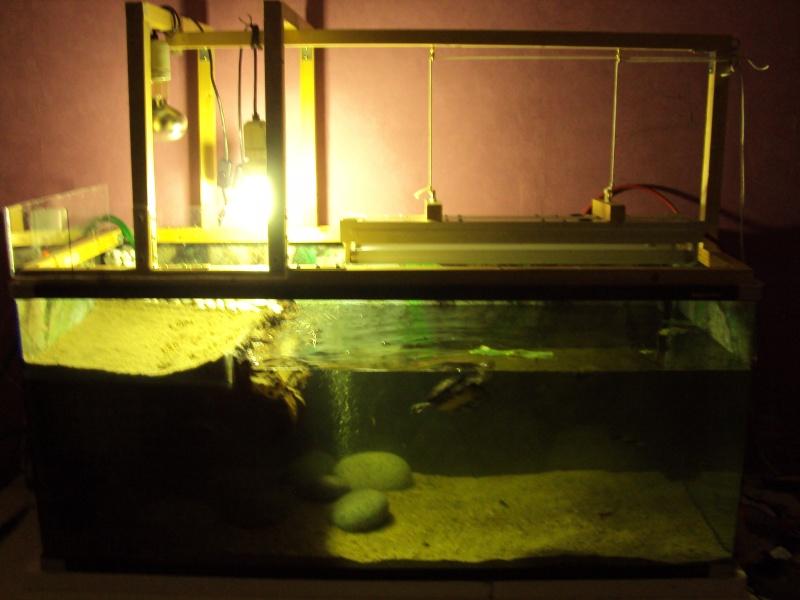 Présentation de mon aquarium n°1 Dsc04512