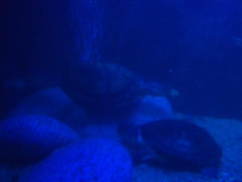 Présentation de mon aquarium n°1 Dsc04515