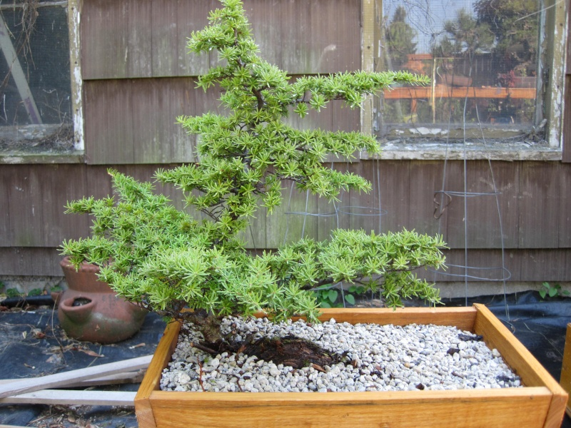 collecting hemlock in the pacific NW Yamado11